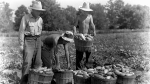 Japanese American men farming at Rohwer Camp