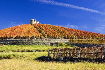 vineyard, winery, autumn