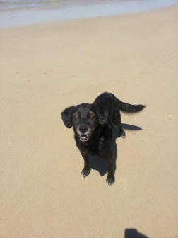 black dog on beach