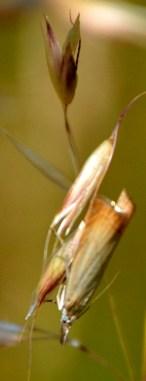 Tiny unidentified moth