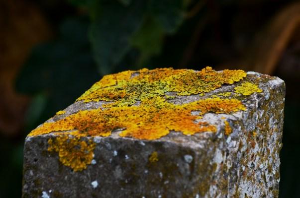 Lichen on fence post