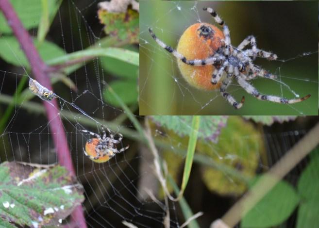 Strange spider