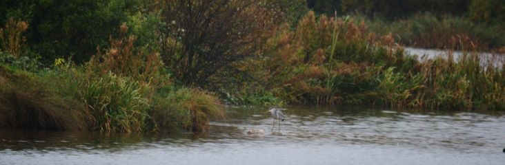 Landscape with heron and rain