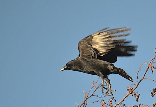 Landing on tree top
