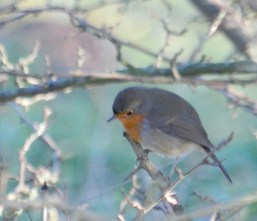 Introspective robin