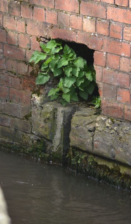 Nettles in a stop slot hole