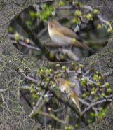 Mystery birdMoss and lichen