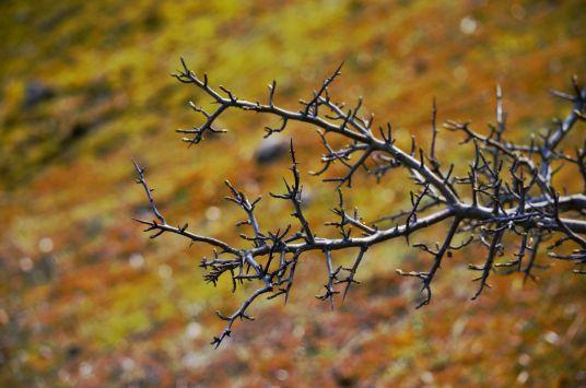Fractal twigs