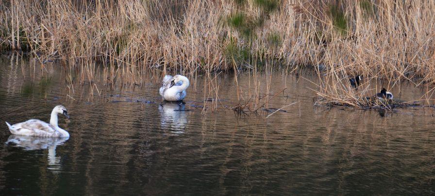 Birds on t'pond