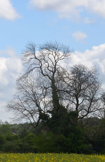 Bare tree against the sky