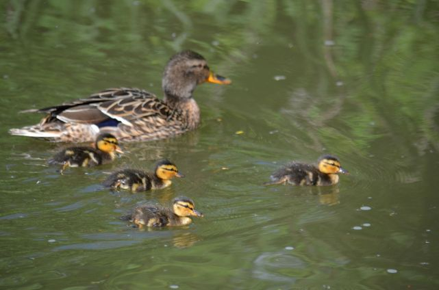 Youngsters on an outing with mum