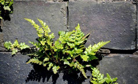 Tiny fern in bridge wall