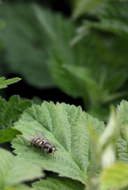 Hover fly not hovering