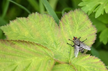 Another house fly
