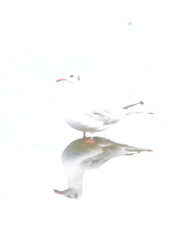 Overexposed gull