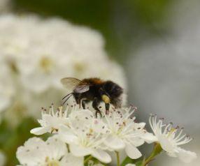 Hunting nectar