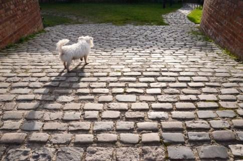 Molly on Duke's Bridge, Cinderhill