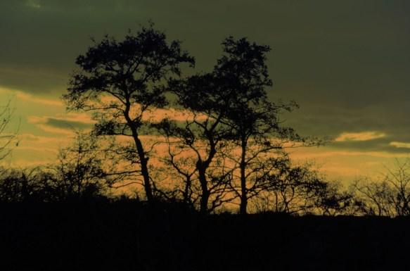 Tree , sunset