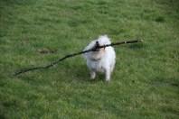 Stick