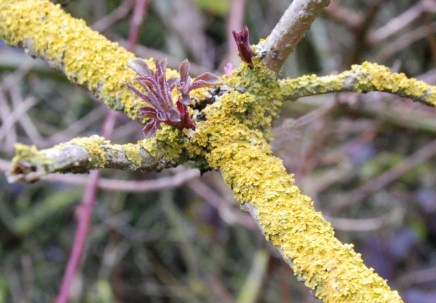 Lichen and shoots