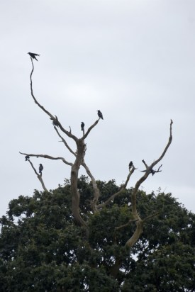 Birds on bare branches