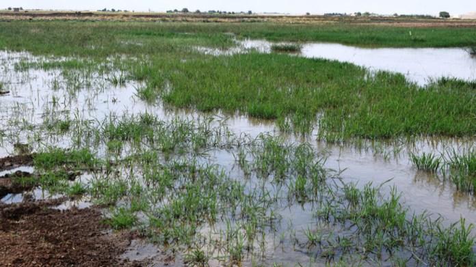 La Turquie a ouvert les vannes de ses barrages et inondé des milliers d'hectares de terresen Syrie. Les fermiers disent que c'est une guerre contre eux.