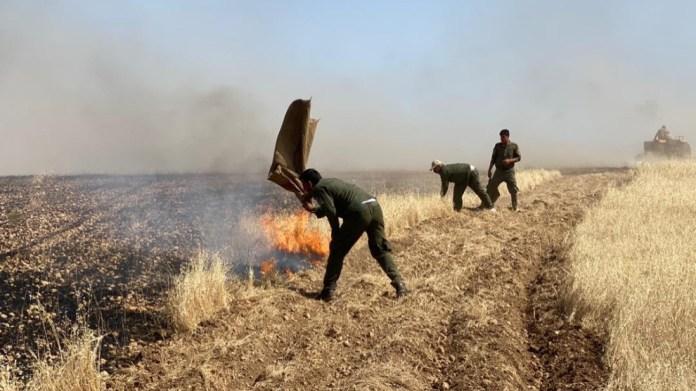 Kobane : Près de 100 hectares de terres agricoles incendiés par des tirs d'artilleries de l'armée turque