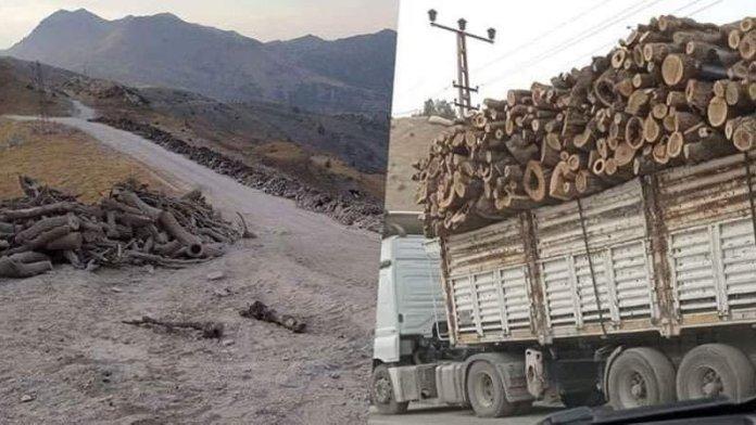 «L'Etat turc coupe les arbres au Kurdistan et largue des bombes dans les zones qu'il ne peut atteindre», ont déclaré les HPG dans un communiqué.