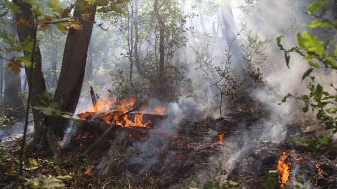 Selon le militant écologiste Vahap Işıklı, il y a une énorme différence entre les feux de forêt dans l'ouest de la Turquie et au Kurdistan