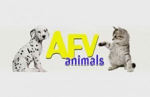 afv-animals