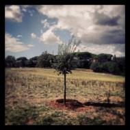 Renato's tree