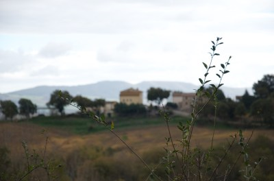 Val D'Orcia 2013 33