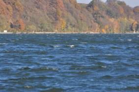 HERBST_Roland Wegerer_Along the Danube_05