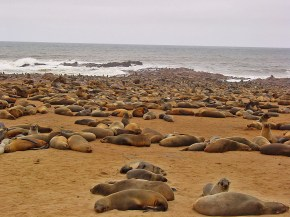 ...and say hello to the seals at Cape Cross