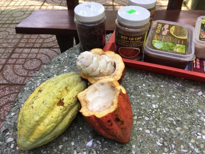 cocoa-farm-vietnam