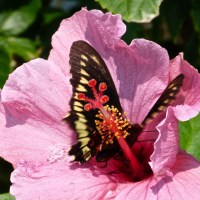 BLOOMING MARVELLOUS: FLOWERS OF ABACO