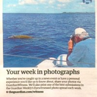 WHALE TALES FROM ABACO (2): MALE BLAINVILLE'S BEAKED WHALE
