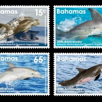 THE BAHAMAS: A STAMPING GROUND FOR DOLPHINS