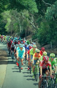 The bunch climbing through Clarendon