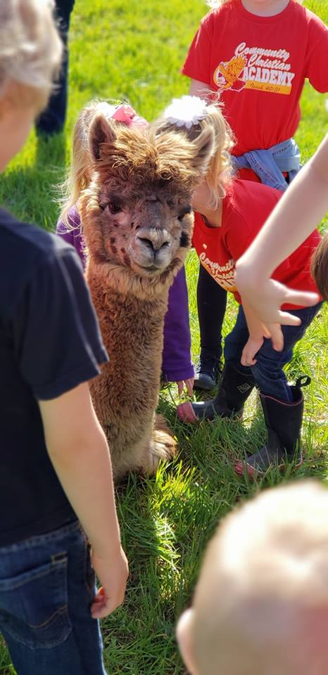 School Field Trips - Rolling Oak Alpaca Ranch
