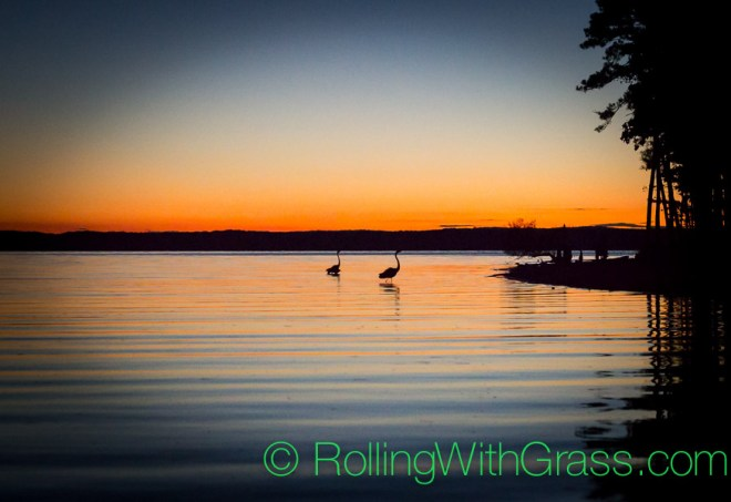 Rolling with Grass Birds Water sunset Jordan Lake NC Fall 2014