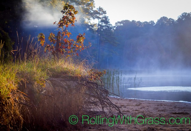Rolling with Grass Sunrise Mist Shore Jordan Lake NC Fall 2014