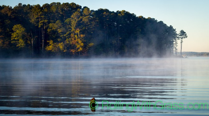 Rolling With Grass at Jordan Lake Sunrise Mist Water Trees