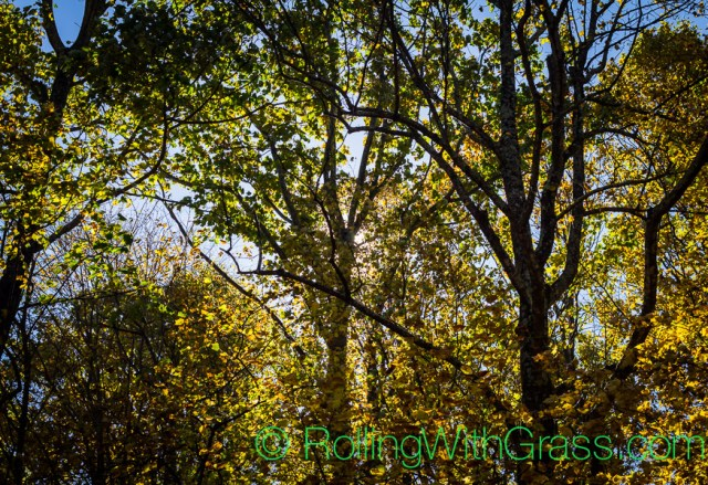 Sun through trees at Peaks of Otter Rolling with Grass VA 10-2014