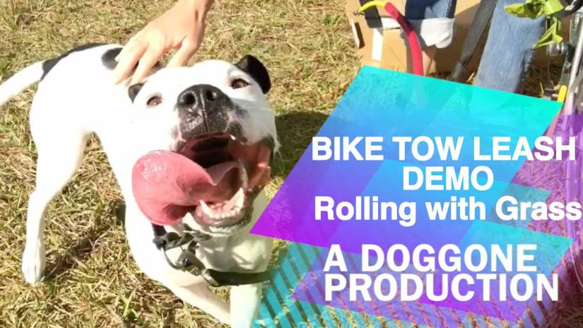 Bike Tow Leash Demo Video with Enzo