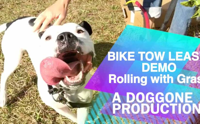 Bike Tow Leash – Demonstration Video with Enzo