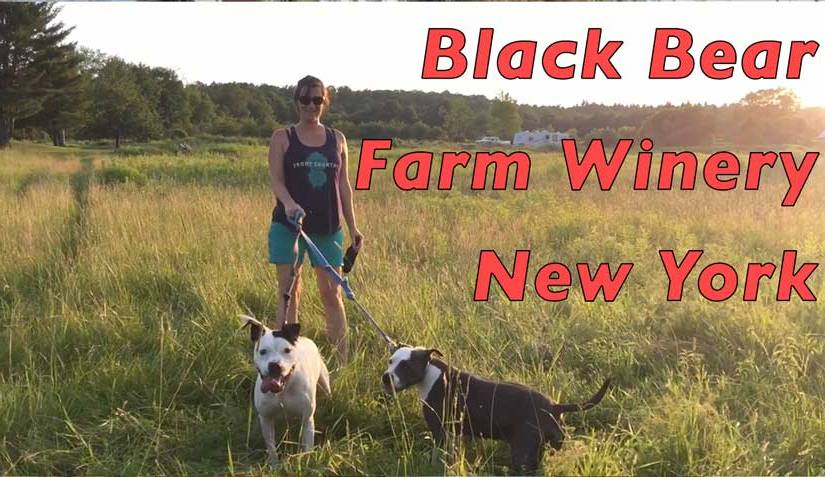 RV Camping in NY: Black Bear Farm Winery Chenango Falls, NY