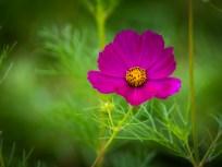 Essex NY Flowers