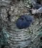 Interesting mushroom growth