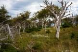 cabot-trail_nova-scotia-56